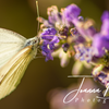 Joanna Drozdek Photography