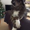 DoggyBoom