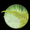 zosia_zlasu
